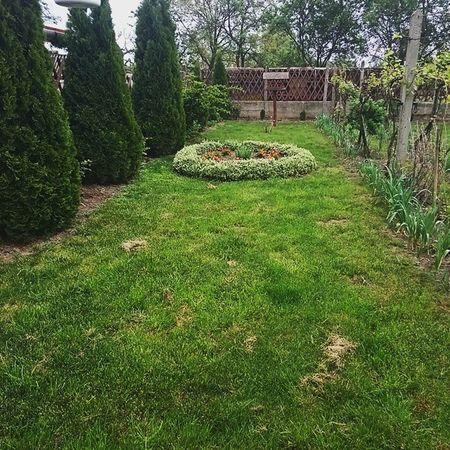 Simple Pleasures Homesweethome Garden Green Nature Hungary Mik Ikozosseg Instahun Grass Kert Otthon Borsod Zöld