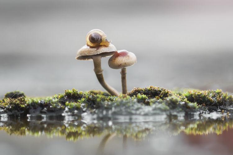slug over mushrooms Selective Focus Nature Day Plant No People Food Water Growth Mushroom Close-up Animal Fungus Animal Themes Beauty In Nature Outdoors Vegetable Moss Tree Animal Wildlife Toadstool