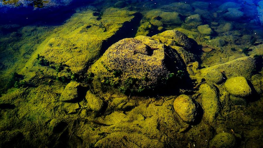 Close-up of turtle on rock by sea