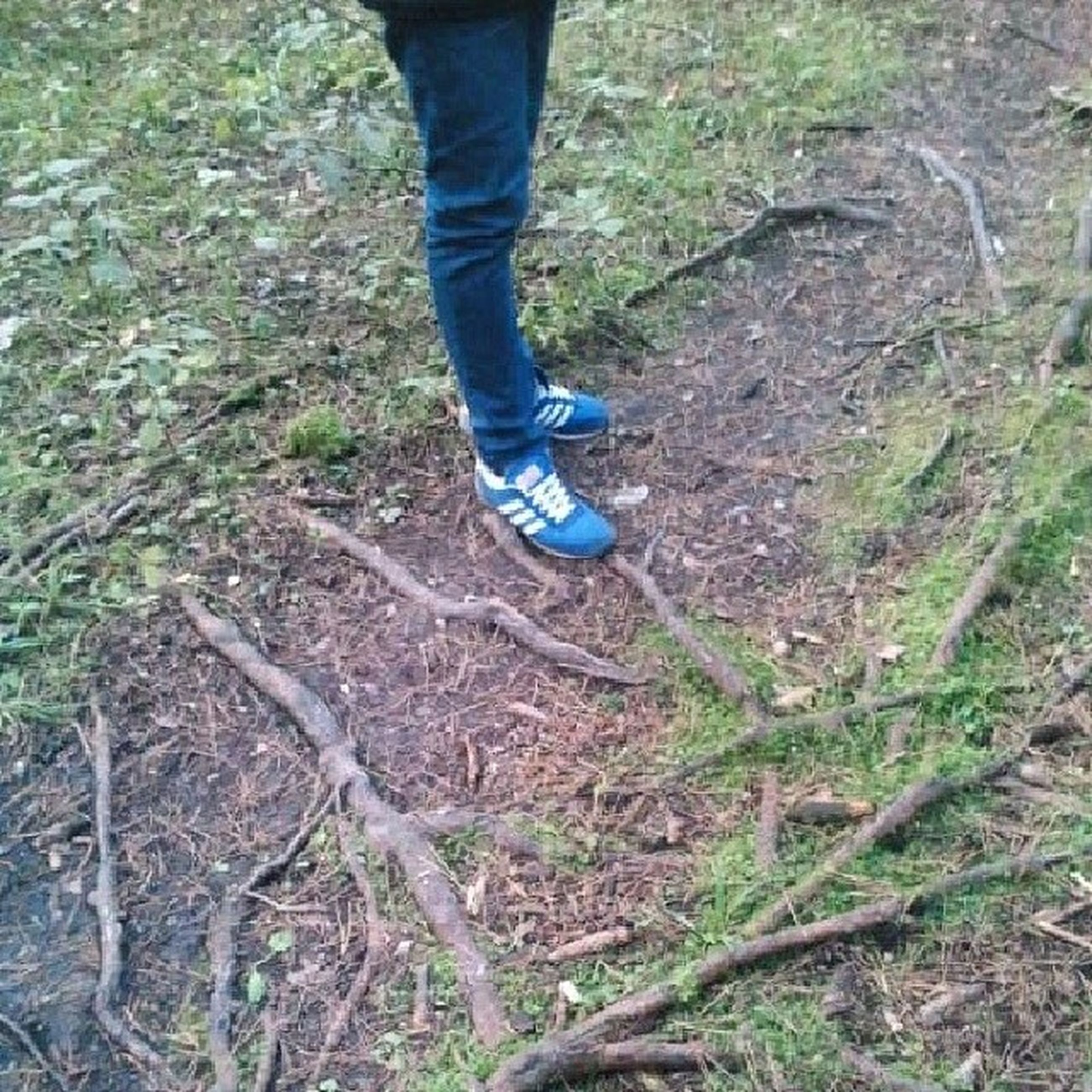 low section, person, shoe, lifestyles, leisure activity, standing, men, jeans, high angle view, unrecognizable person, footwear, human foot, grass, forest, day, outdoors, field