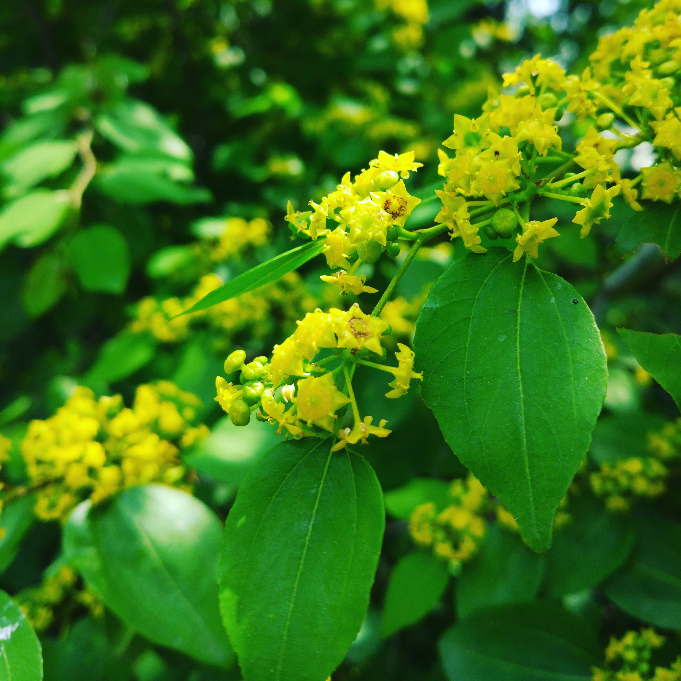 growth, green color, leaf, beauty in nature, nature, flower, freshness, plant, fragility, day, outdoors, yellow, no people, close-up, agriculture, flower head