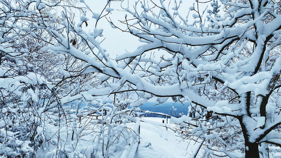 Full frame shot of snow covered bare trees