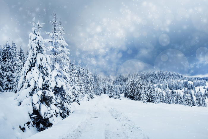 Winter Vacation Wintertime Beauty In Nature Bokeh Cold Temperature Day Fir Fir Trees Forest Nature No People Outdoors Scenics Snow Snowcapped Snowing Snowy Spruce Tranquility Tree Trees Covered With Snow Weather Winter Winter Holidays Winter Wonderland