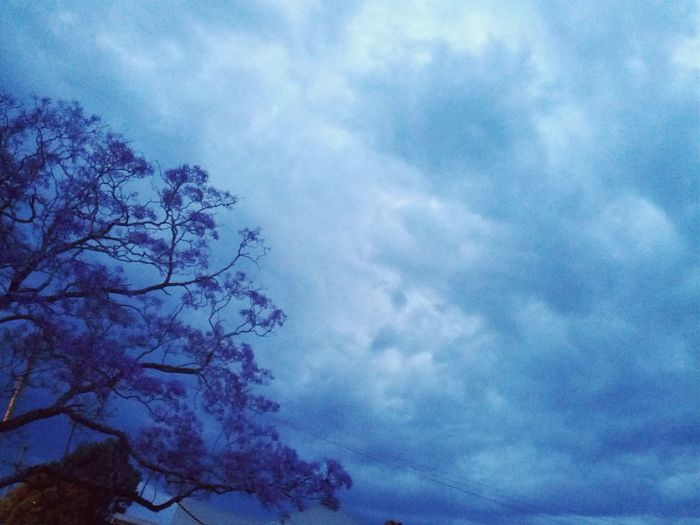 Storm Clouds Jacaranda Tree Blues And Purples Australia Anticipation