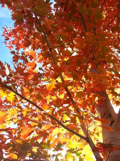 What Inspries You? Flippa K Asks: What Inspires You? Fall Trees