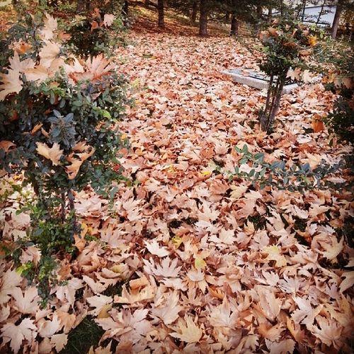 Ankara'da sonbahar. Her hüzün, bir anı barındırır içinde.Sonbahar Ankara Aga ç Yaprakdokumu winter instafollow instaturkey instagood yalnızsehir