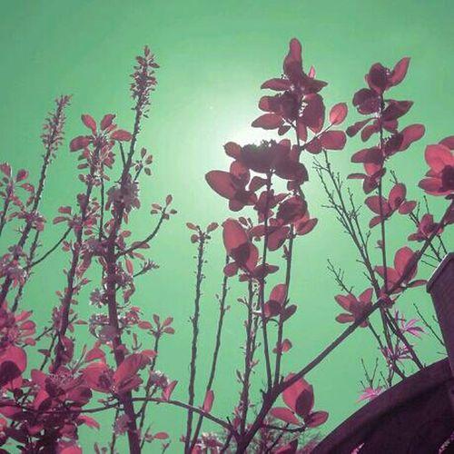Arizona Pink Green Summer
