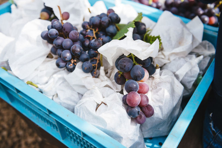 Harvesting of wine grapes in Yamanashi, Japan. Close-up Day Food Freshness Fruit Grapes Harvest Healthy Eating Indoors  Nature No People