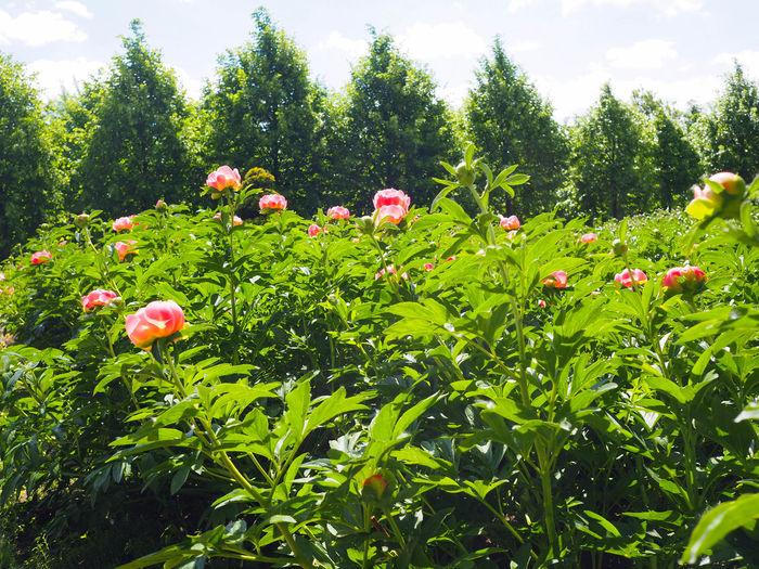 Red flowering plants on field against trees