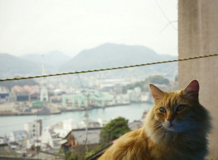 Japan Photography Onomichi Stray Cat Cat Photography Cat Cat Lovers Cats Of EyeEm