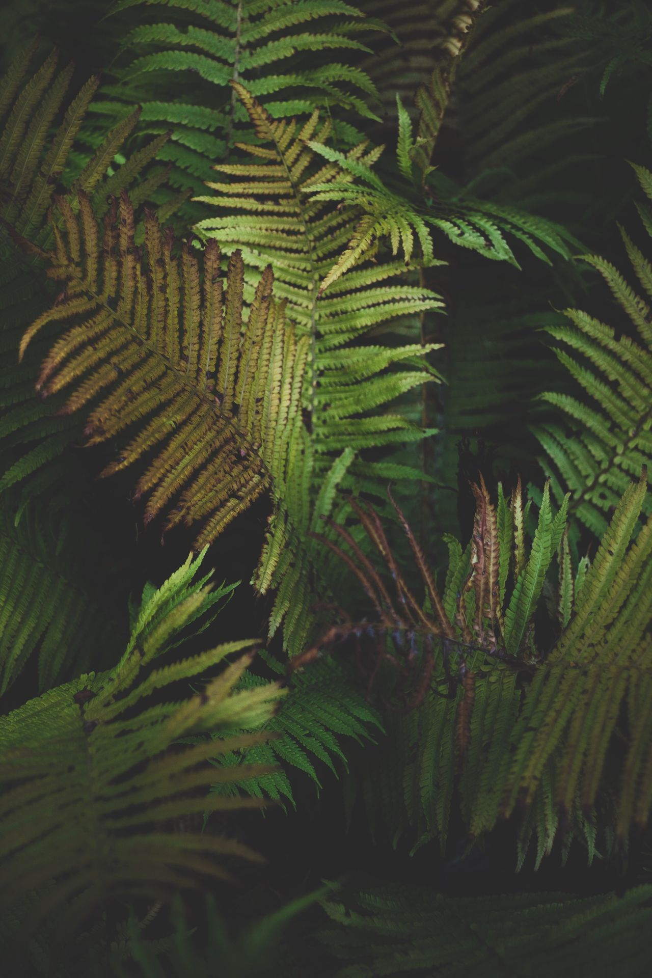 green color, growth, nature, fern, leaf
