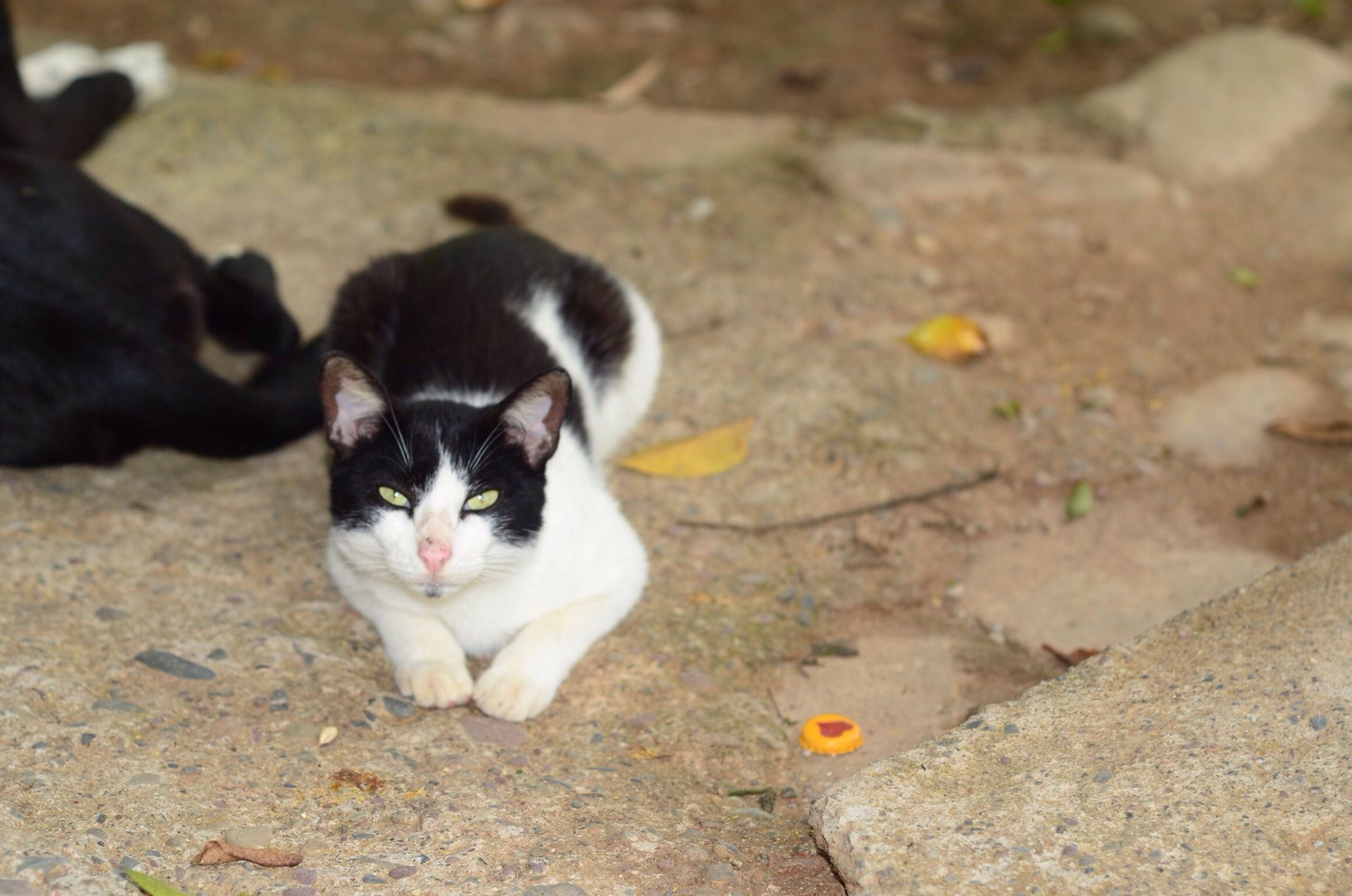 animal themes, domestic animals, pets, one animal, mammal, dog, looking at camera, portrait, domestic cat, focus on foreground, cat, sitting, high angle view, street, feline, relaxation, outdoors, cute, young animal, close-up