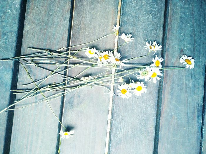 Directly Above Shot Of Daisies On Wooden Table