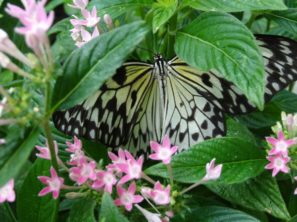 Animal Themes Animal Wing Animals In The Wild Beauty In Nature Butterfly Butterfly - Insect Close-up Day Flower Flower Head Focus On Foreground Fragility Freshness Green Color Growth In Bloom Insect Nature One Animal Petal Pink Color Plant Pollination Springtime Wildlife