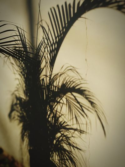 Close-up of silhouette palm tree against sky