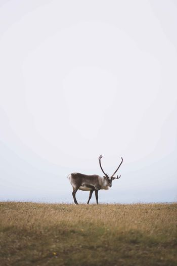 Deer on landscape against sky
