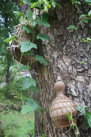 Plant Growth Leaf Plant Part Green Color Nature Day Close-up Focus On Foreground No People Beauty In Nature Outdoors Tree Tree Trunk Trunk Land Bamboo - Material Handmade Bamboo Handicrafts