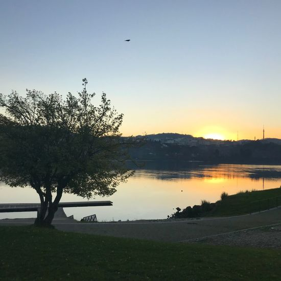 Quiet freezing afternoon Portugal Douroriver Tree Nature Beauty In Nature Tranquil Scene Scenics Sunset Shades Of Winter
