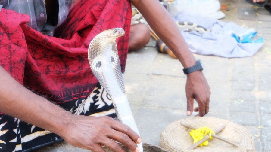 Low section of man holding snake while sitting on street