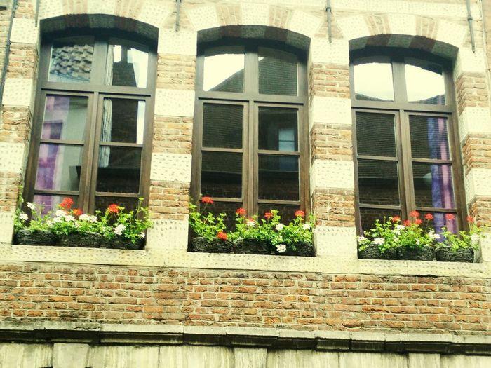 Vacation Belgium Veranda Outside Sunny Day Flowers Brick Building Brick Architecture Flemish Flemish Architecture