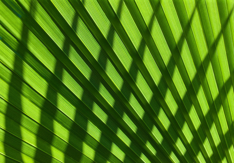 Backgrounds Close-up Day Frond Full Frame Green Color Growth Nature No People Outdoors Palm Tree Pattern Textured