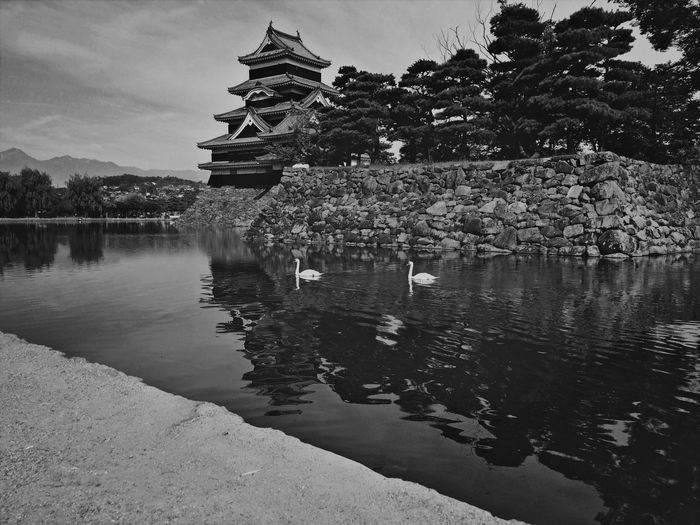 Swans swimming in pond against matsumoto castle
