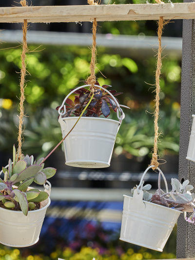Close-up of potted plant hanging on rope in yard
