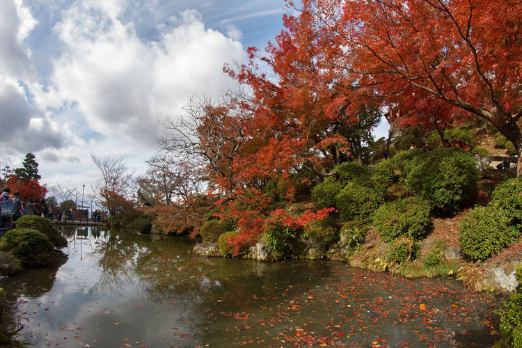 Tree Plant Autumn Change Water Sky Nature Beauty In Nature Cloud - Sky Reflection Day Growth Tranquility No People Orange Color Scenics - Nature Tranquil Scene Lake Architecture Outdoors Fall Autumn Collection