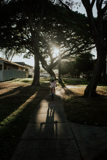 Man riding bicycle on tree