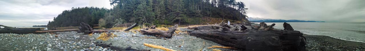 Beauty Landscape Panaromic Spit Ocean Mountain Trees Driftwood Washington State Cloudy