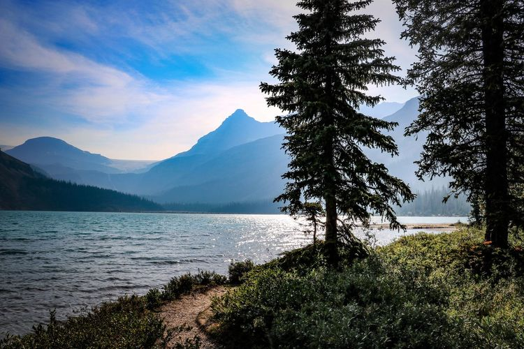 Banff National Park  Canada Bow Lake Plant Tree Beauty In Nature Water Scenics - Nature Tranquil Scene Mountain Tranquility Sky Nature Lake No People Mountain Range Day Outdoors Idyllic