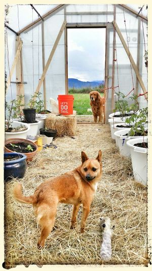 My Dog Is Cooler Than Your Kids Mountain View Happy Dogs Tomatoes Greenhouse
