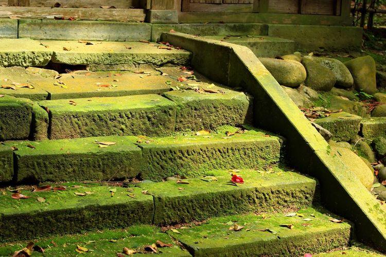 steps Stone Steps Steps Stone Temple Fukui MIKUNI Moss