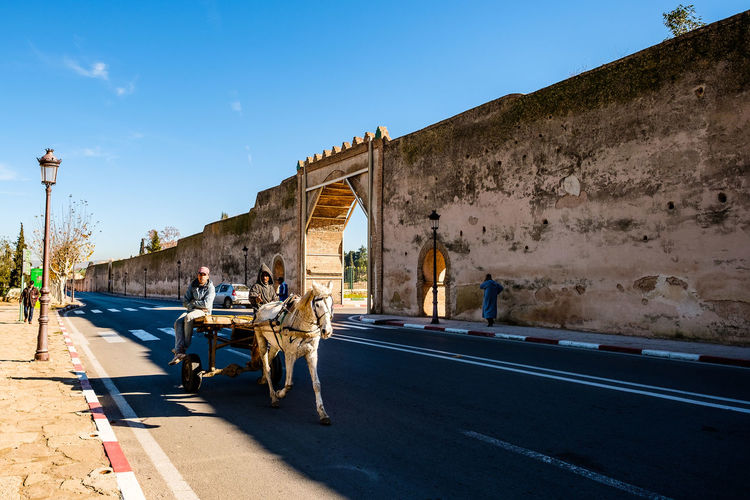 Meknès Morocco Travel Blue Carriage Clear Sky Culture Domestic Animals Horse Road Tourism Travel Destinations