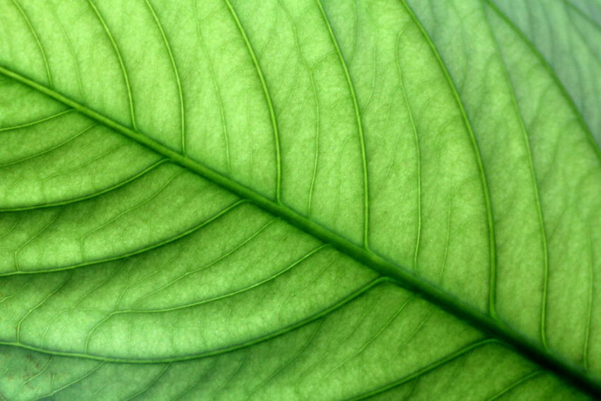 Backgrounds Banana Leaf Beauty In Nature Close-up Day Fragility Freshness Full Frame Green Color Growth Leaf Nature No People Outdoors Plant Textured