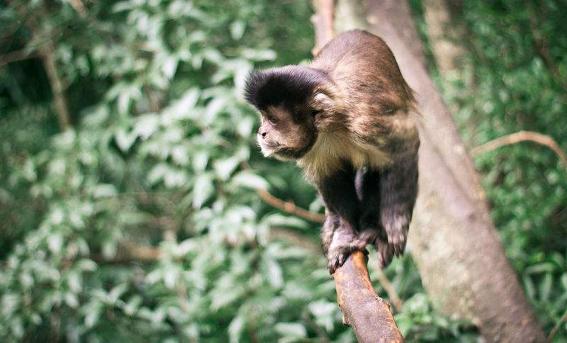 Animal Themes Animal Wildlife Animals In The Wild Close-up Day Mammal Monkey Nature No People One Animal Outdoors The Great Outdoors - 2017 EyeEm Awards Tree