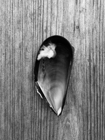 Mussel shell Blackandwhite Close-up Moules Mussel Musselshell Shell Still Life Wood - Material