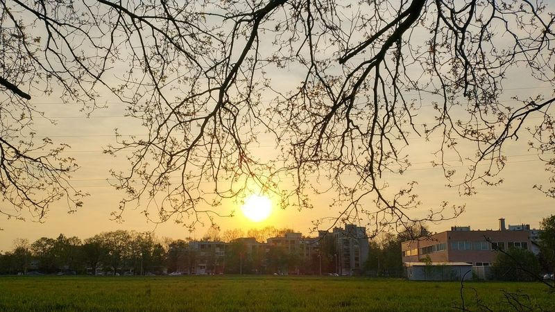 Tree Flying Sunset Sun Sky Grass Shining