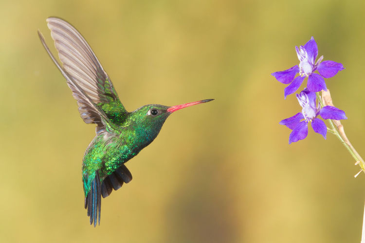 Close-up of hummingbird flying in sky