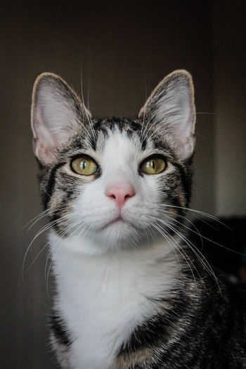 Cute Cat Animal Themes Cat Cat Eyes Cat Whiskers Close-up Day Domestic Animals Domestic Cat Feline Indoors  Jedi The Cat Jedi The Kitten Kitty Nose Looking Up Mammal No People One Animal Pets Portrait Whisker