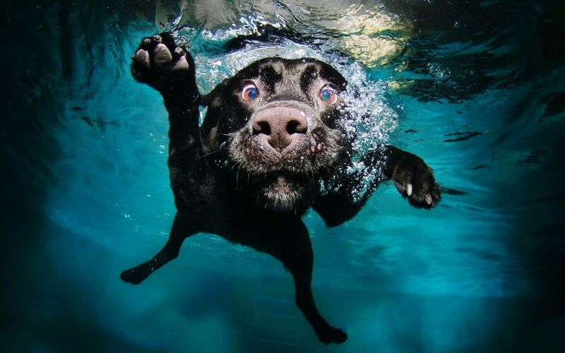 BlackDog Doglover Doglife Underwater Underwater Photography