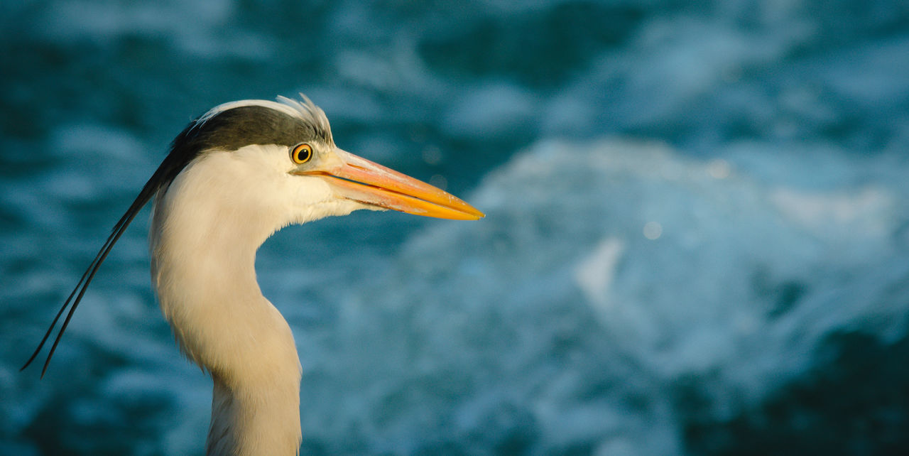 Close-Up Of Heron Against Blue River