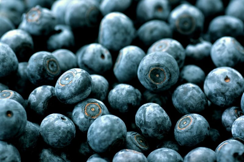 Backgrounds Blueberries Close-up HealtyFood Outdoors