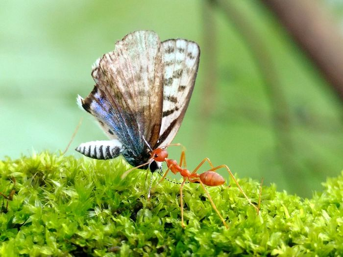 Macro shot of butterfly and insect fighting on plant