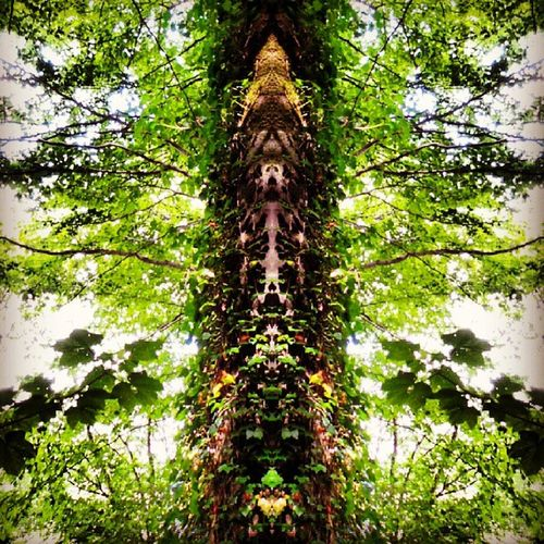 Treeart Foresttotem Lismorewoods