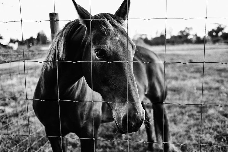 Lonely Horse , Christchurch Newzealand Meadow Villa Relaxing Enjoying Life Taking Photos Showcase: February Snapseed Walking Around Overseas Travel EyeEm Best Shots EyeEm Nature Lover EyeEm Animal Lover Fujifilm X-E2 Vocation Holidays Sadness Sad & Lonely Blackandwhite Black & White Blackandwhite Photography Black And White Summer Memories 🌄