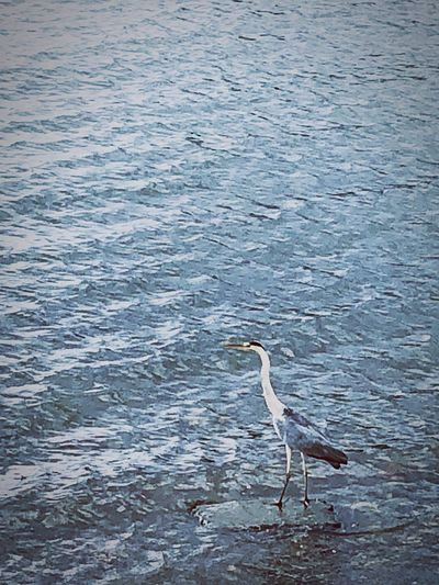 Animal Themes Animal Vertebrate Animals In The Wild Animal Wildlife Water Bird One Animal No People Day Nature High Angle View Water Bird Scenics - Nature Outdoors Beauty In Nature