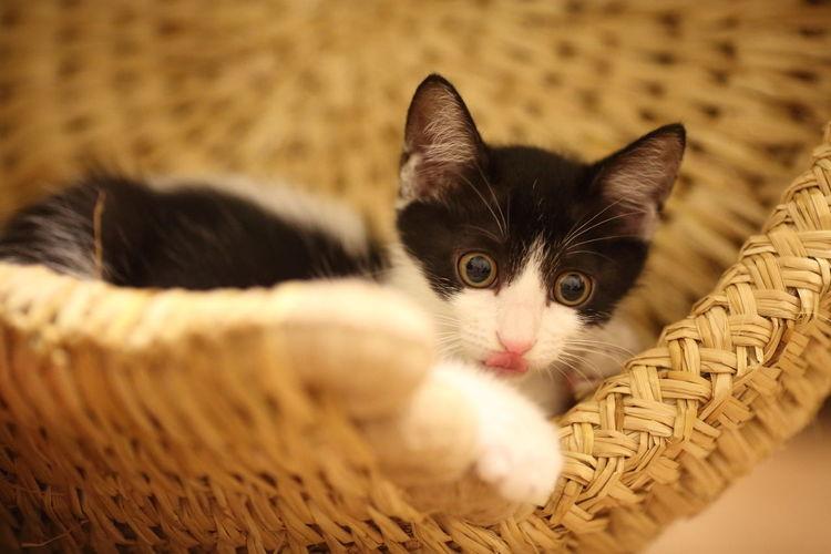 Close-up portrait of kitten in wicker basket