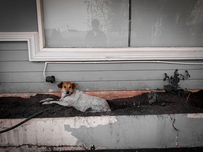 Portrait of dog sitting on entrance of building