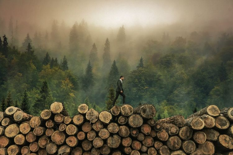 Side view of man walking on woodpile in forest during foggy weather